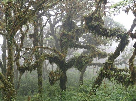 Galapagos Wildlife: Scalesia Forest © GCT