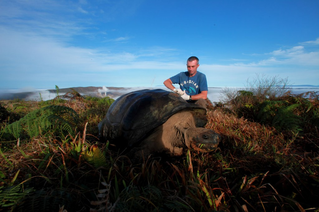 Galapagos People: Dr. Steve Blake tracking a Galapagos giant tortoise © Christian Ziegler