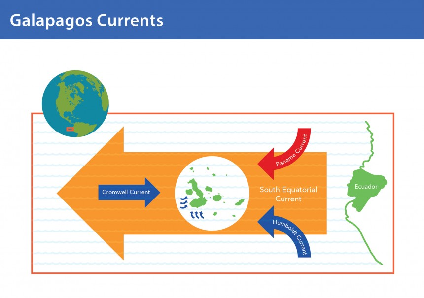 Galapagos Graphics: A diagram showing the ocean currents affecting Galapagos © GCT