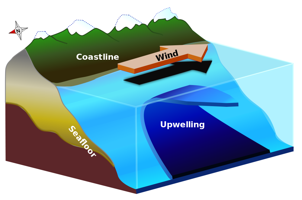 Galapagos Graphics: In the northern hemisphere, if the wind blows parallel to the coast, then Ekman transport can produce a net movement of surface waters, potentially resulting in coastal upwelling (diagram by Lichtspiel)