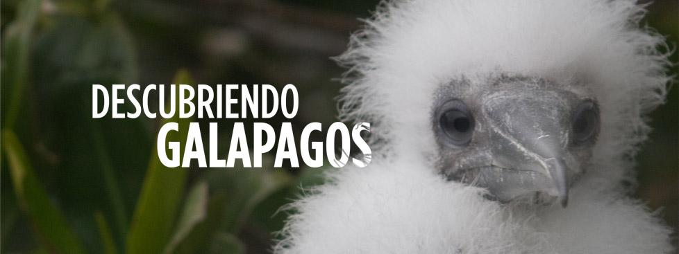 Galapagos Graphics: Descubriendo Galapagos (© Jan Schubert)