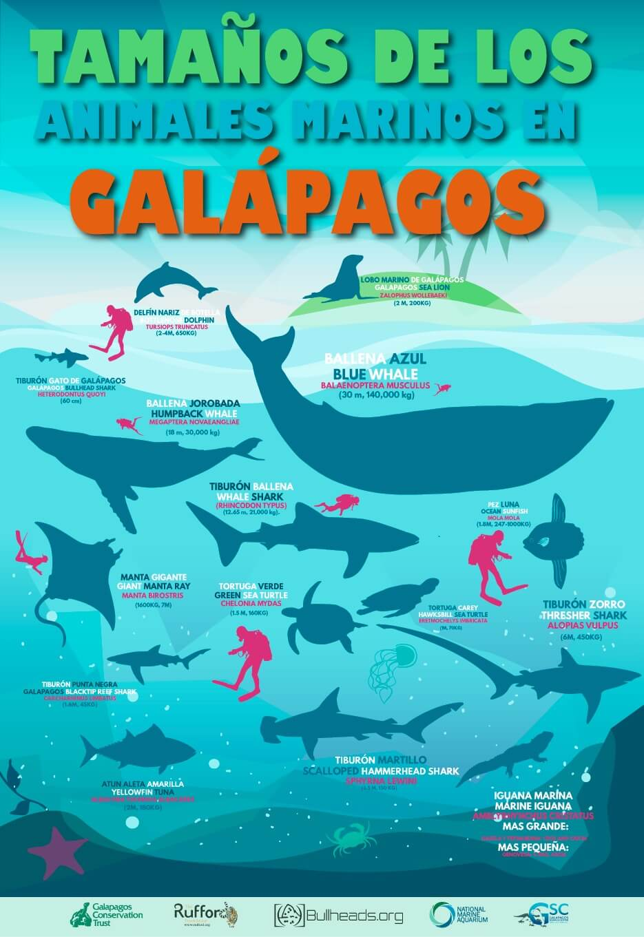Galapagos Graphics: Sizes of Galapagos marine species