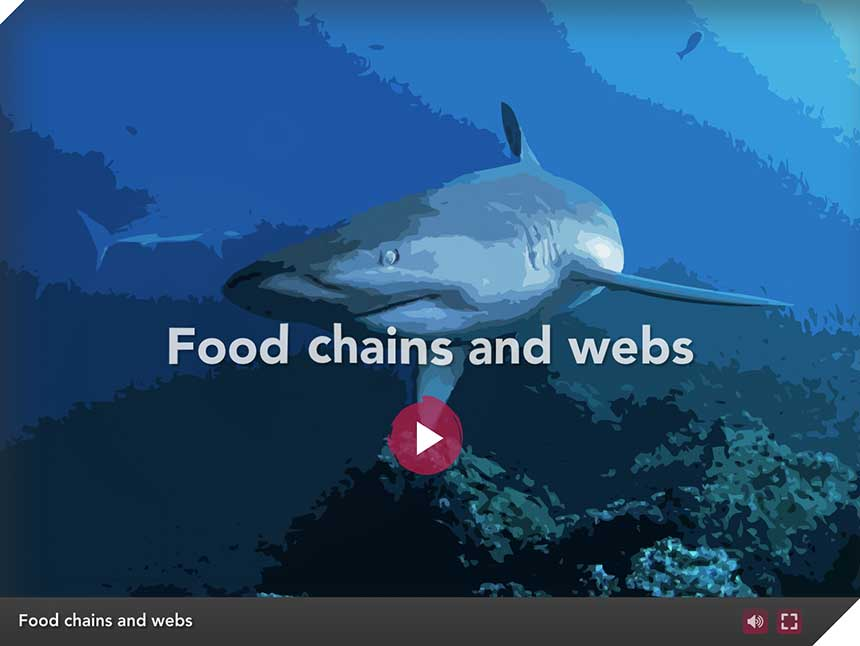 Galapagos Graphics: Food chain activity opening image