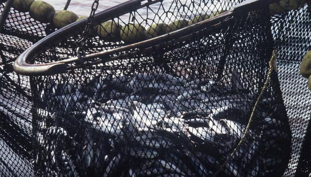 Overfishing © WWF