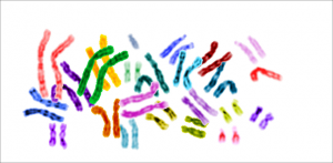 Galapagos Graphics: Chromosomes © National Institute of Health