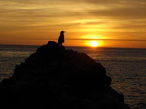 11.c.-Penguin-at-sunset-Antje-Steinfurth