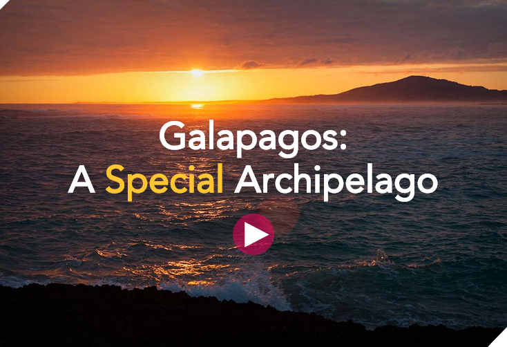 Galapagos Graphics: Special Archipelago Holder Image