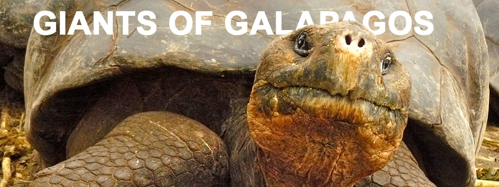 Galapagos Graphics - Giants of Galapagos © David Tozer