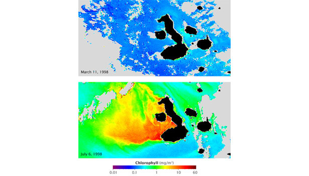 Galapagos Graphics: El Nino vs La Nina © NASA Earth Observatory