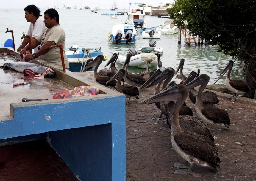 Galapagos Places: Santa Cruz © Chris Deeney